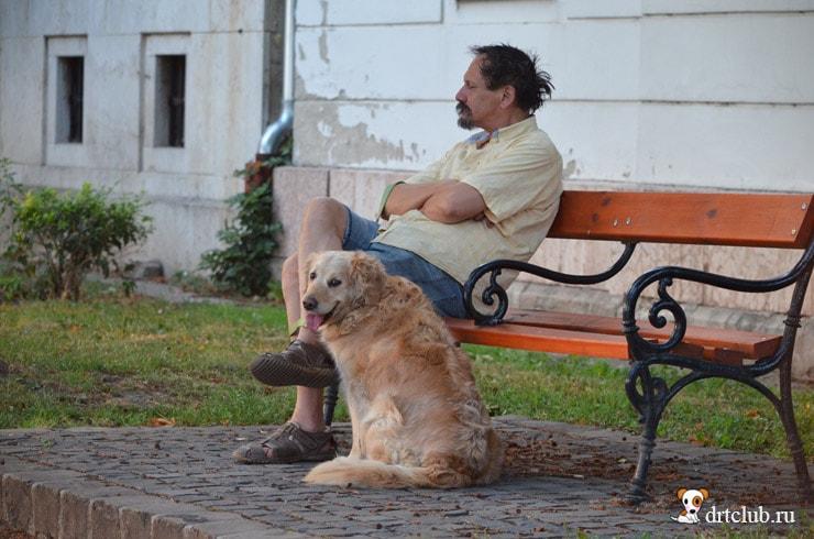 Бывалый пёс
