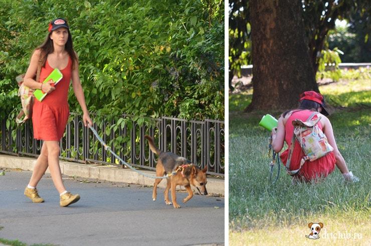 В Венгрии убирают за собачками