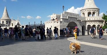 В бастионе с собакой