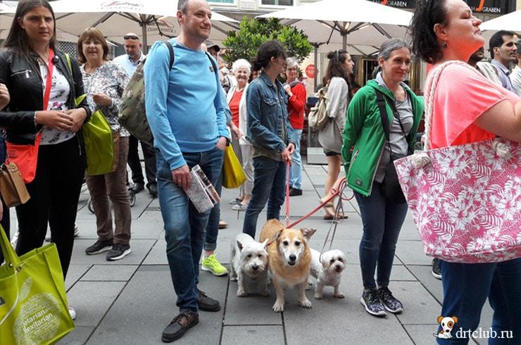 Люди и собаки любовались