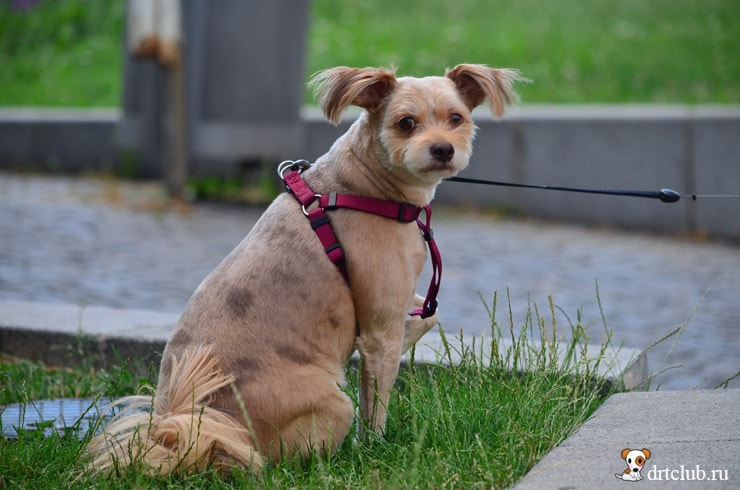 Смешнючий пёс