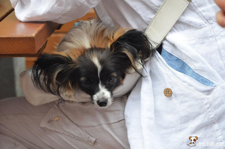 Пёсик в сумке
