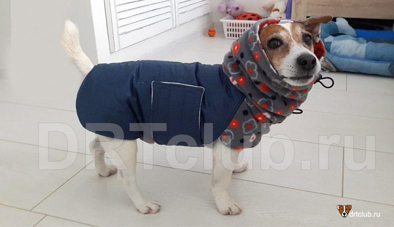Утеплённая попона для собаки своими руками