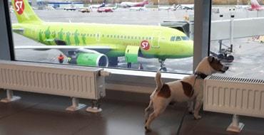 С собакой на самолёте