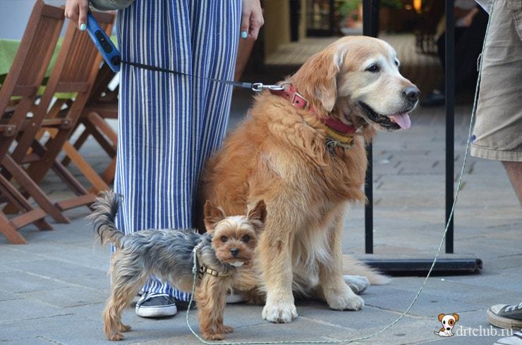 Собаки Словакии
