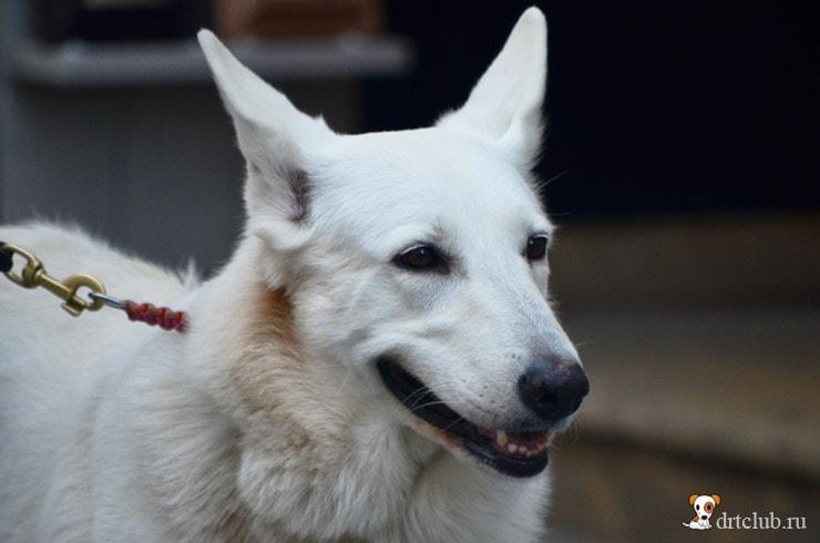 Братиславский пёс