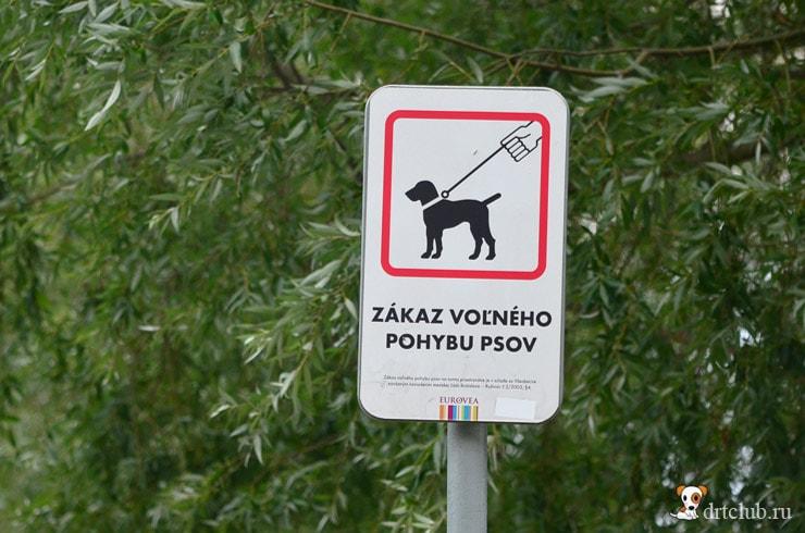 Запрет передвижения собак