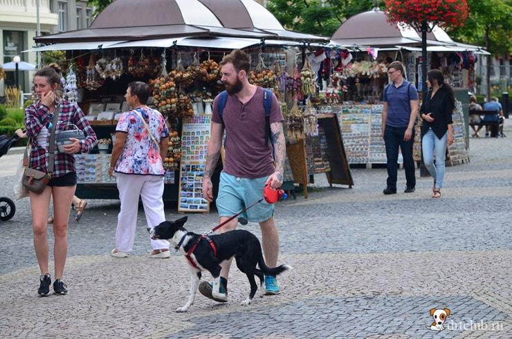 Словацкие собаки