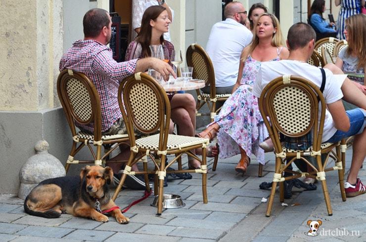 Собаки Братиславы