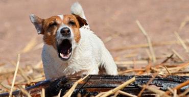 Какие привычки не любят собаки