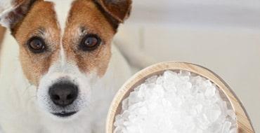Можно ли собакам соль
