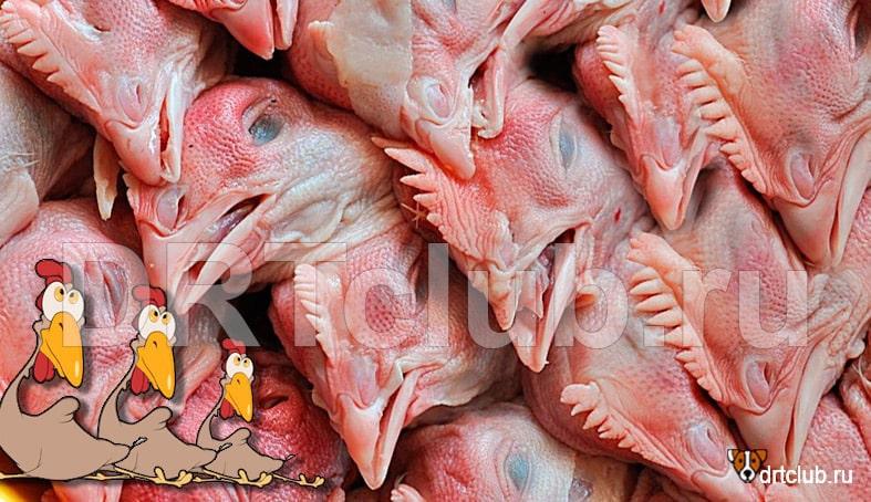 Куриные головы для собак