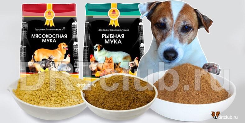 Мясокостная мука для собак: польза или вред