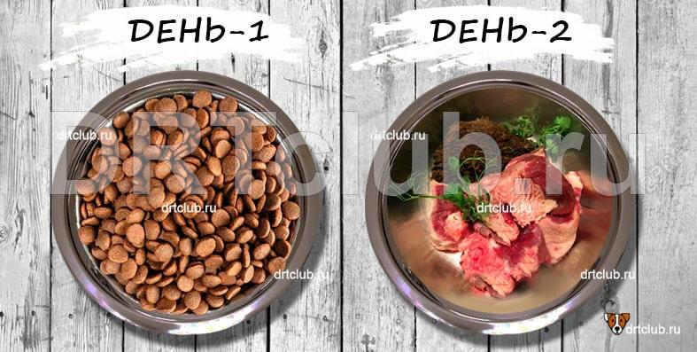 Как перевести собаку на натуральное сырое питание