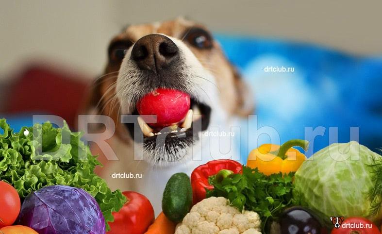 Растительная составляющая рациона собаки