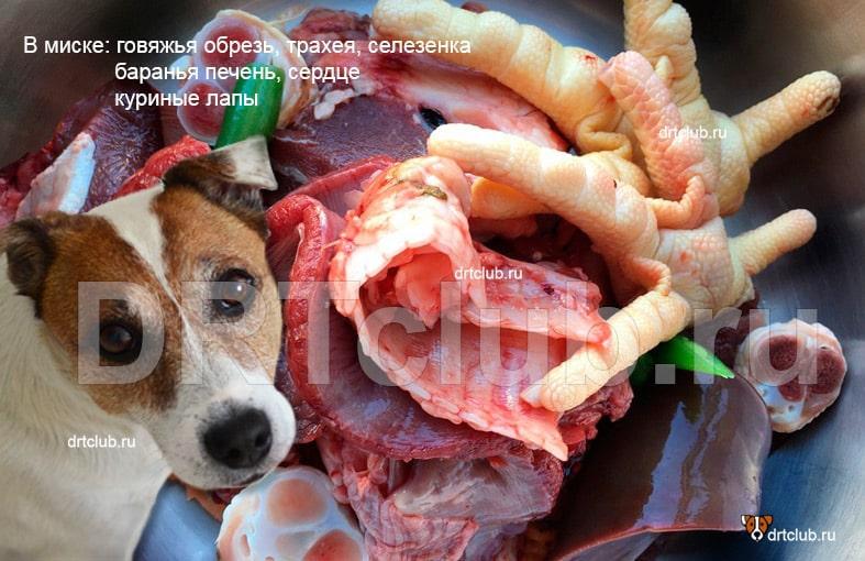 КАК кормить собаку по системе RAW