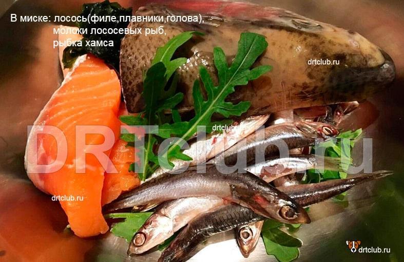 Рыба в модели питания RAW