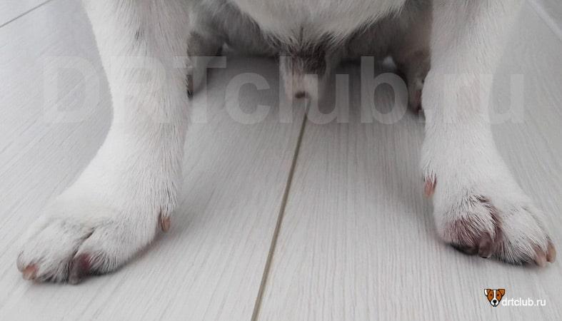 Коготь приобрел болезненно-бордовый оттенок