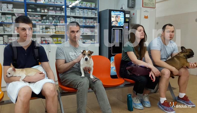 Схватив Джека мы помчались в ветеринарку