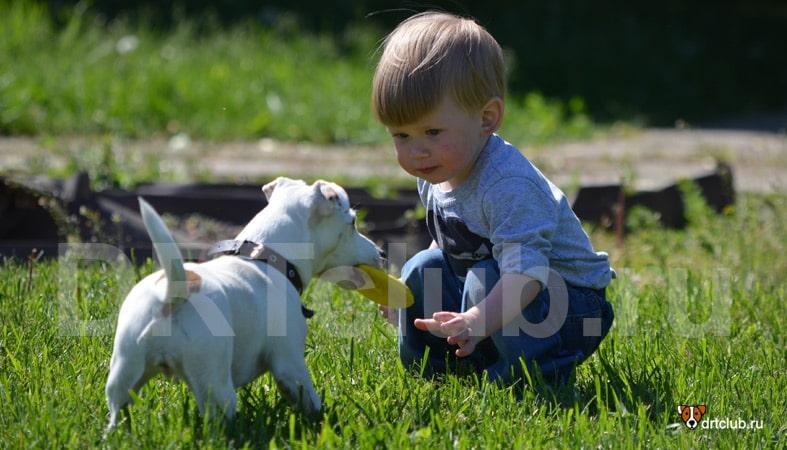 Не позволяйте детям трогать собак без разрешения
