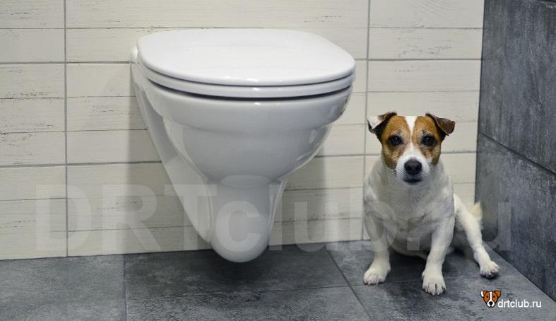 Теперь мы знаем почему собака идёт за хозяином в туалет