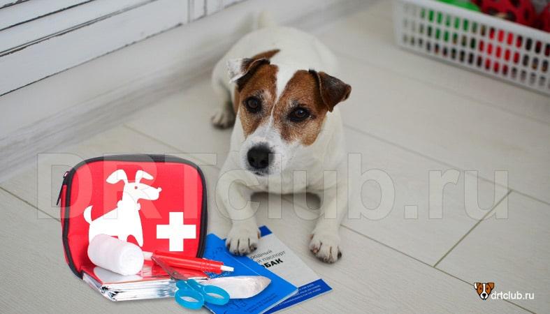 Аптечка для собаки: 15 необходимых препаратов