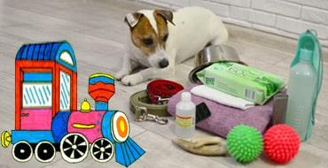 Перечень необходимых вещей для перевозки собаки в поезде