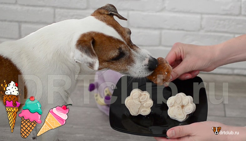Как приготовить мороженое для собаки: рецепты