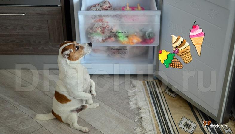 Можно ли собакам мороженое: какое и в каком количестве