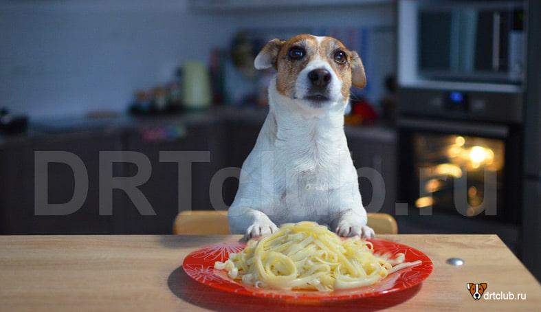 Как правильно давать макароны собаке