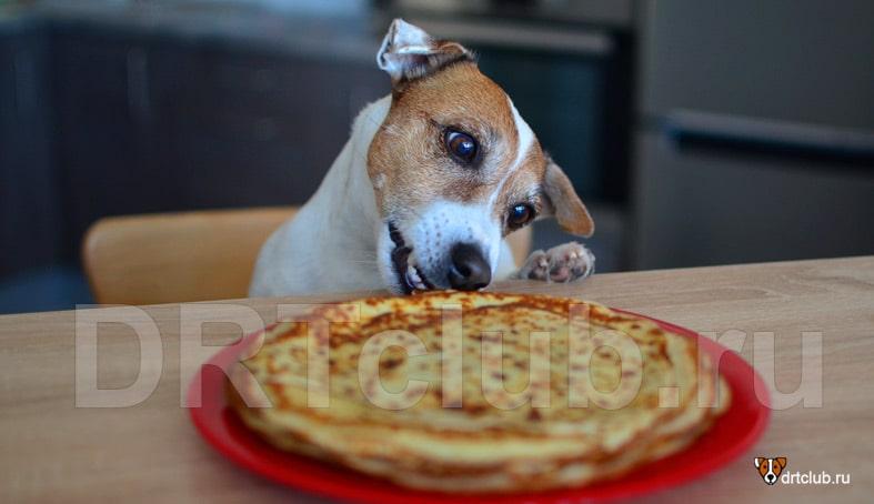 Несбалансированная система питания у собак