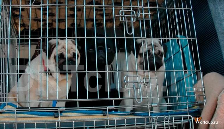 Для чего нужны квартирные клетки для собак