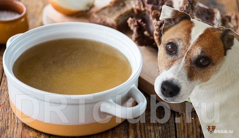 Мясной бульон для собак