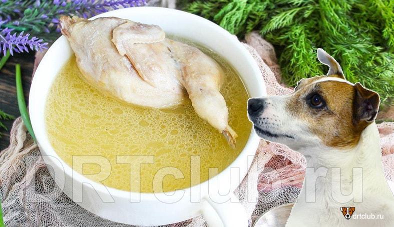 Можно ли куриный бульон собаке