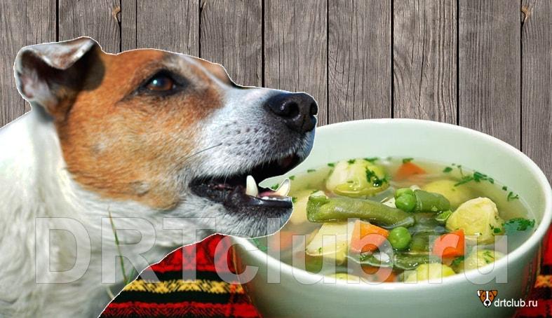 Можно ли собаке давать бульон
