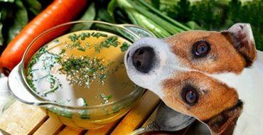 Можно ли давать собаке говяжий бульон