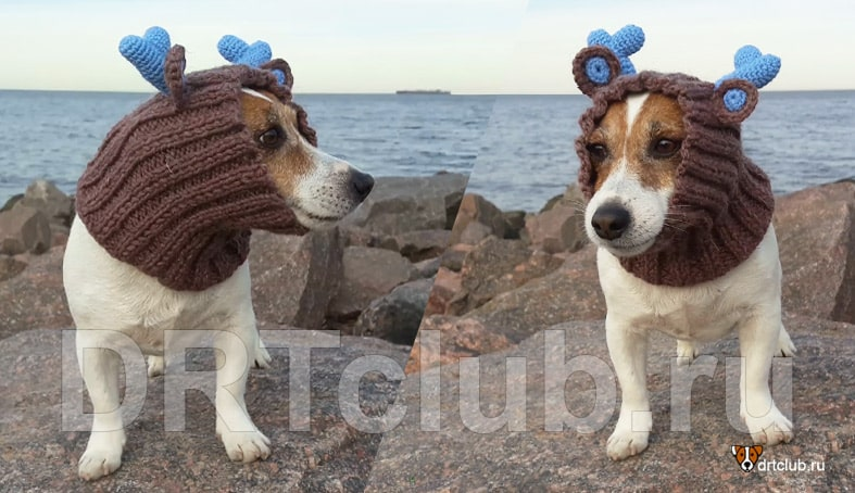 Как самостоятельно связать шапку для собаки спицами