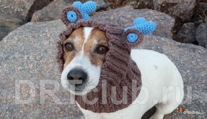 Шапка для собаки спицами: вяжем сами
