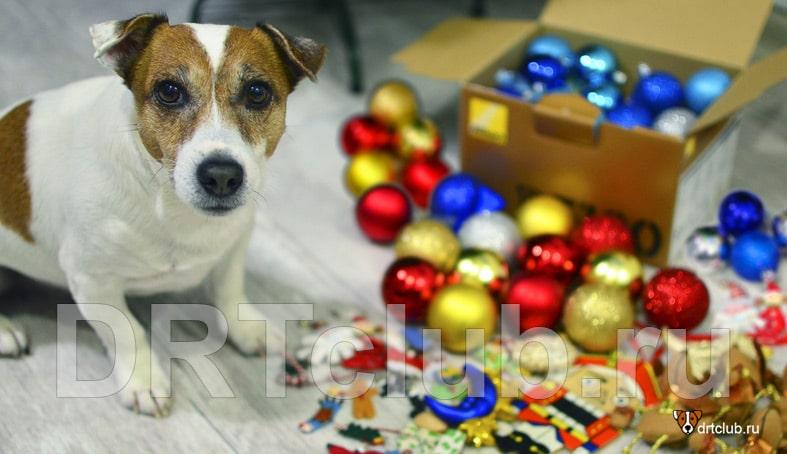 Джек готовится к празднованию Нового года