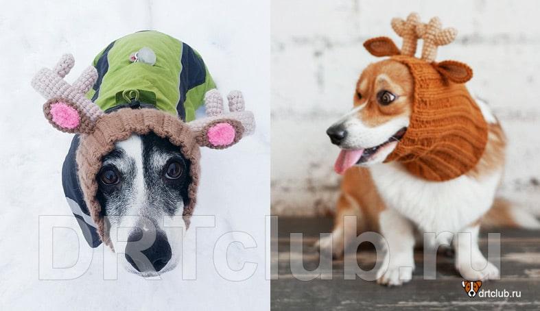 Шапка в подарок собаке