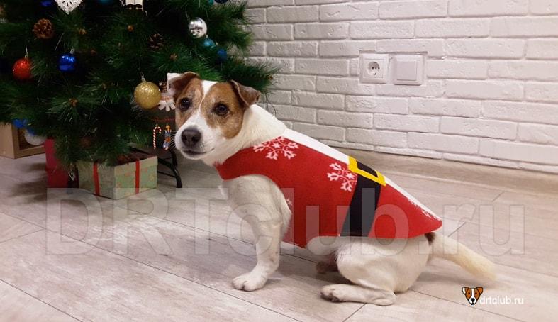 Костюм Деда Мороза для собаки своими руками