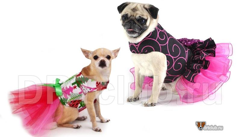 Простая выкройка платья для собаки
