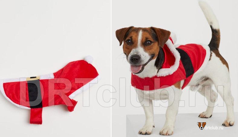 Новогодний костюм Деда Мороза для собаки своими руками