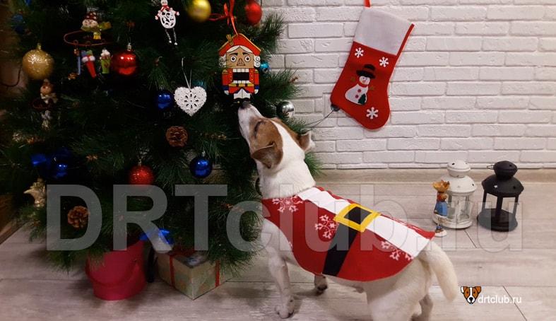 Костюм Санта Клауса для собаки