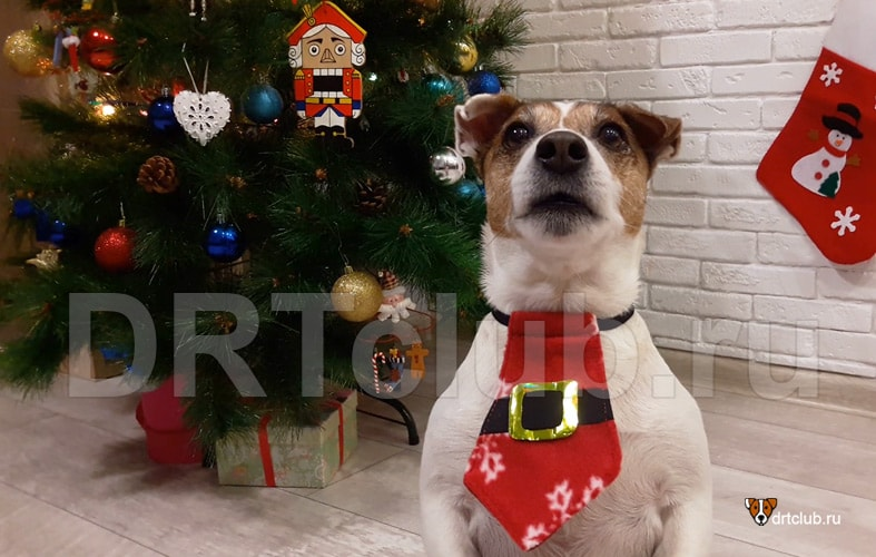 Новогодний галстук для собаки