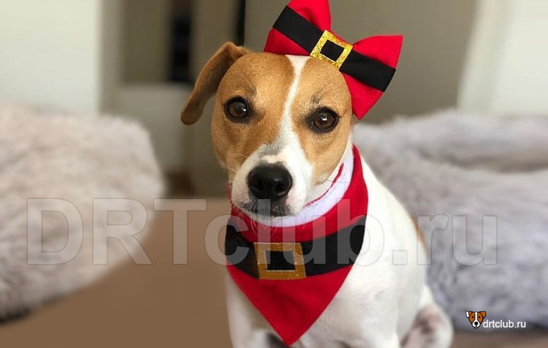 Новогодняя бандана для собаки