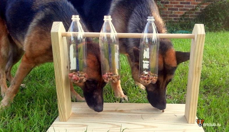 Хитрый диспенсер для собаки