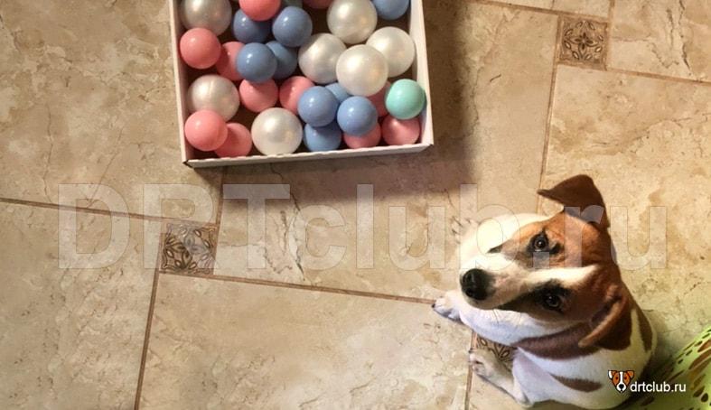 Пластмассовые шарики для игры