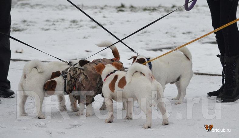 Поводок или рулетка для собаки: что выбрать