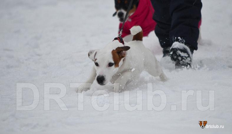 Поводок-рулетка для собаки